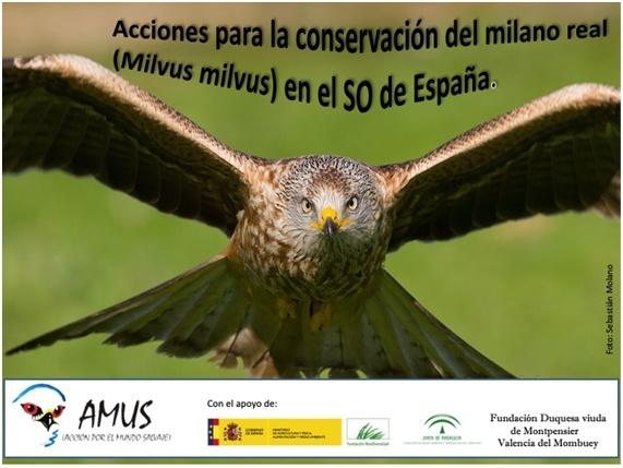 Acciones para Conservación del Milano real en el SO de España