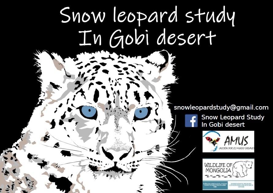 Pacto en la conservación del leopardo de las nieves en el desierto del Gobi