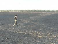 Uno de los campos arrasado por el fuego