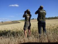 Antares y Laura, avistando aguiluchos cenizos