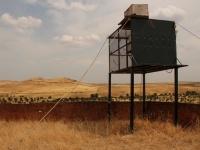 Hacking de cernícalo primilla en Ribera del Fresno, Badajoz.