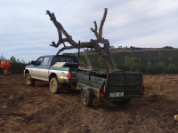 Transportando ramas de alcornoque, para posadero. Año 2015.