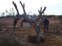 Construcción de muladar. Colocando posadero. Año 2015.