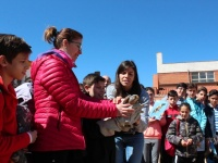 Liberación de cernícalo vulgar (Falco tinnunculus) en Colegio de Arroyo de San Serván, Badajoz