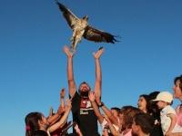 Pini libera un águila calzada con niños.