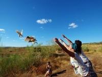 Marga y Rafa recibieron de regalo de bodas el apadrinamiento de dos lechuzas (Tyto alba) a las cuales liberaron en Mina de Pino, Palomas.