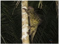 Secuencias de actuaciones con diferentes especies en la Estación Biológica Tambopata en Perú.