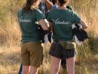 Voluntarias atendiendo a los medios de comunicación que asistieron a liberación el 20-07-19 en el Parque Natural de Cornalvo