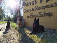 Unida canina de AMUS conformada por estos tres perros que han superado un escrupuloso proceso de selección.